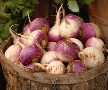 Milan Turnips